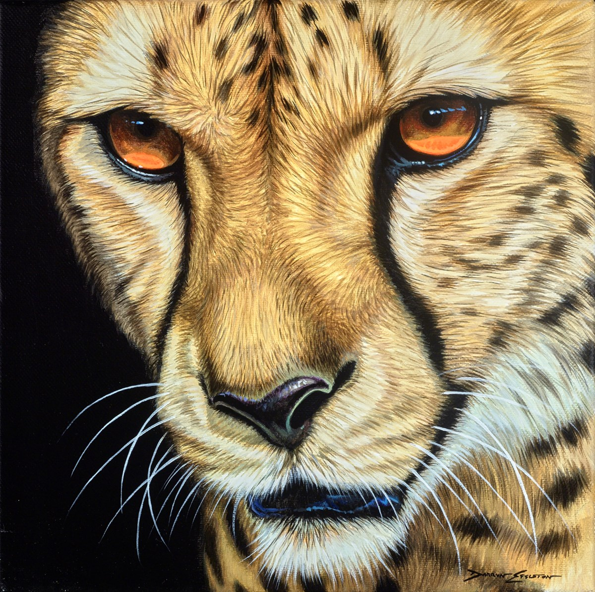 Amber Eyes by darryn eggleton -  sized 12x12 inches. Available from Whitewall Galleries